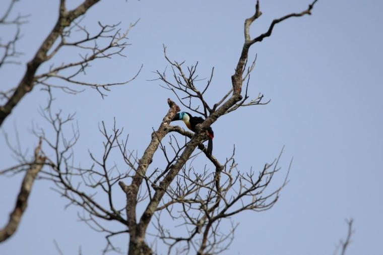 toucan ariel 03