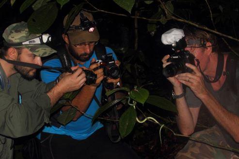 Trois hominidès absorbés , Photo de Philippe Gauthier