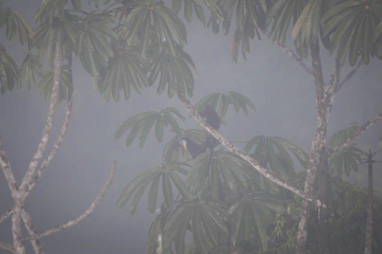 singe et toucan