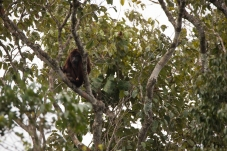 baboune 06 petit saut mai 2018